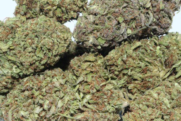 DrGanja Pineberry CBD Hemp Flower