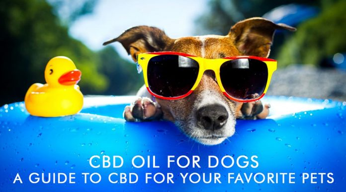 CBD Oil For Dogs: A Guide To CBD For Your Favorite Pets